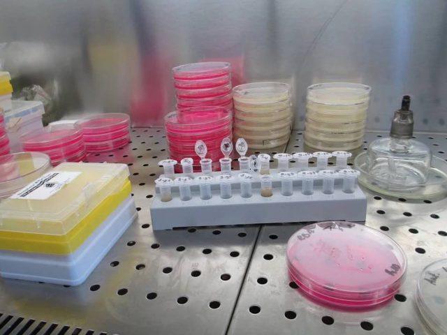 3D-Hautmodelle aus dem Reagenzglas